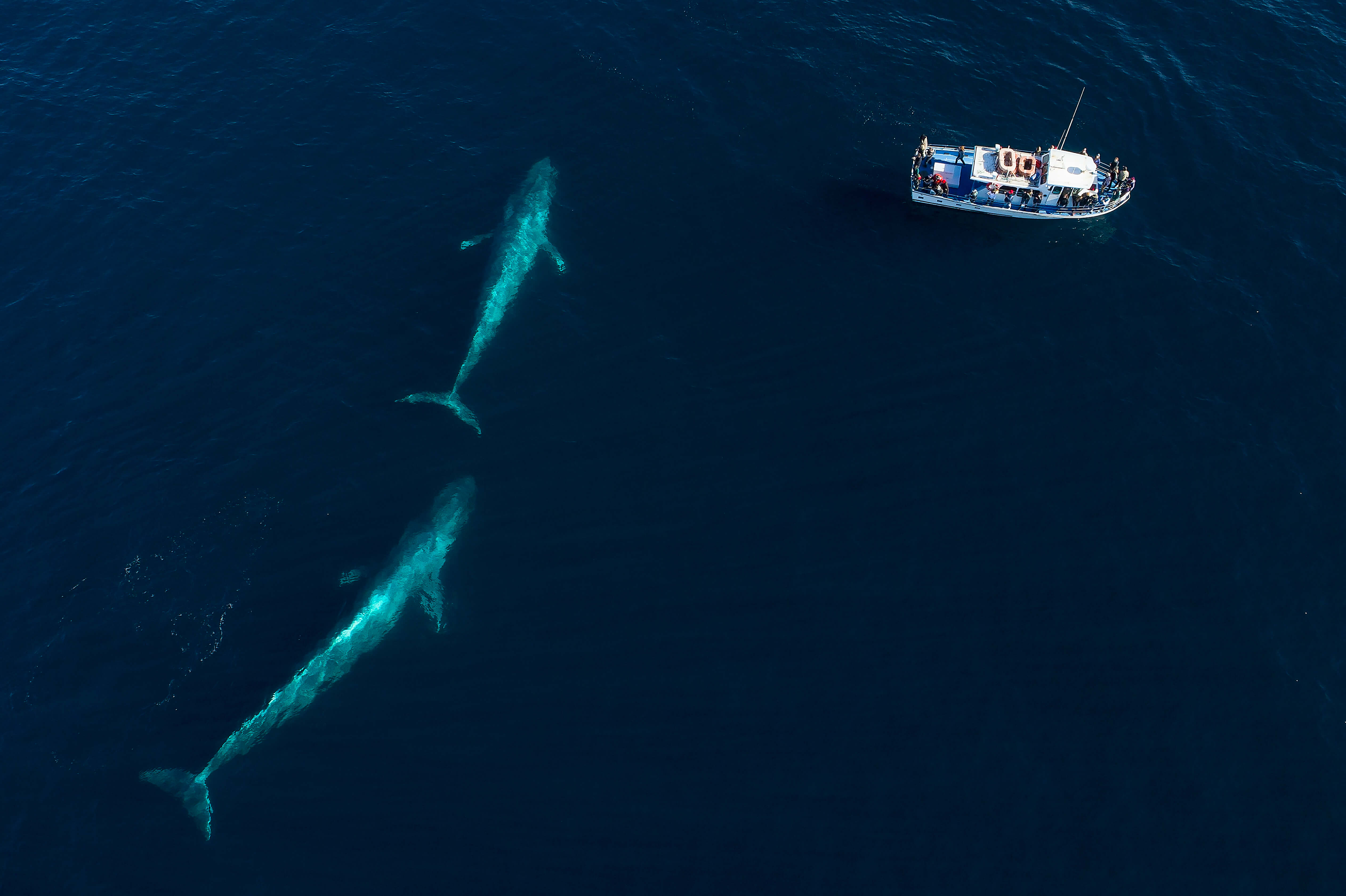 Antarctic Blue Whale Research | AST Oceanics